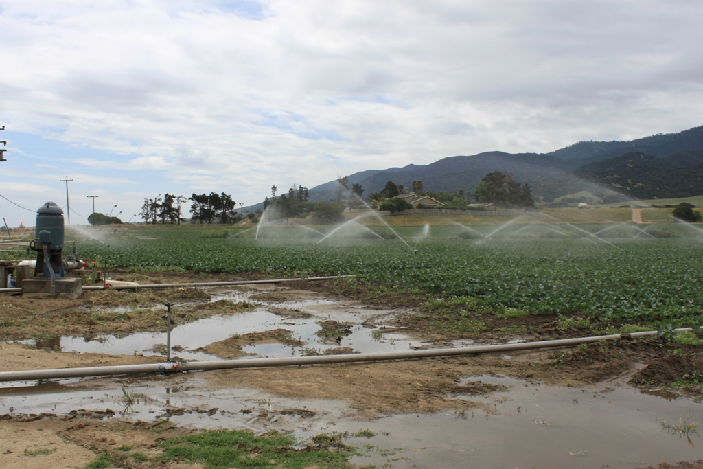 Salinas Valley agriculture May 2014 #44