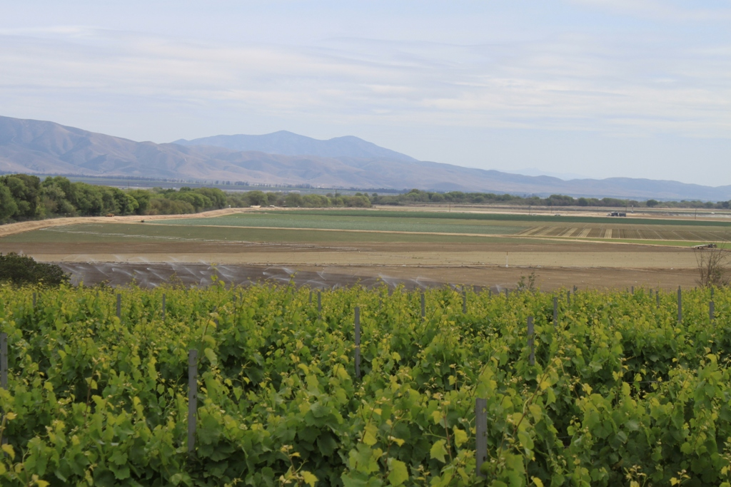 Salinas Valley agriculture May 2014 #54