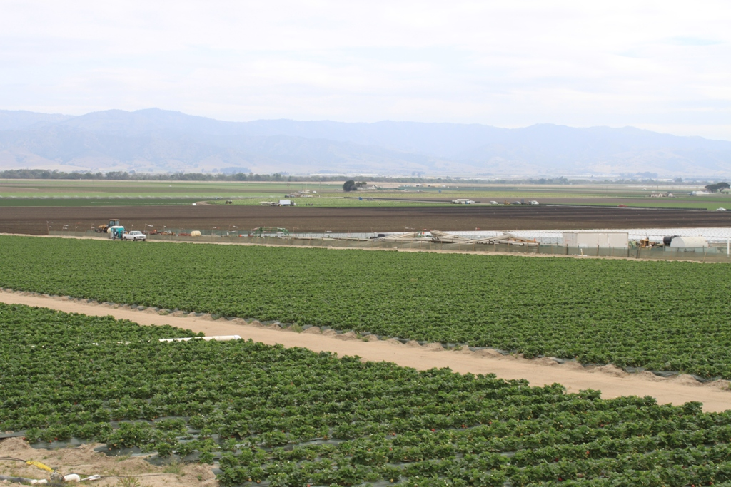 Salinas Valley agriculture May 2014 #6