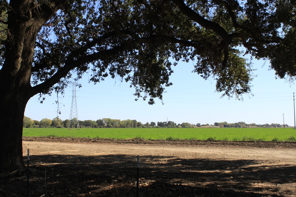 Agriculture - Sacramento Valley Oct 2013 #2