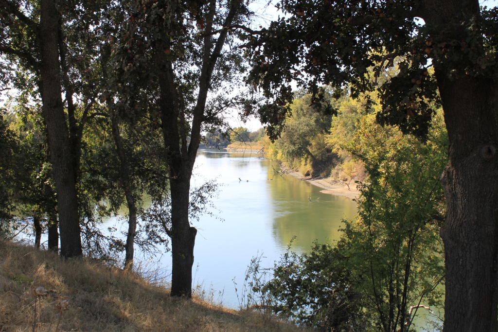 Sacramento River at the Fremont Weir - Oct 2013 #10