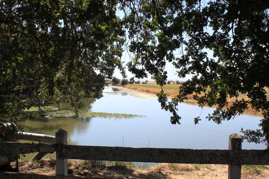 Babel Slough Aug 2014 #2