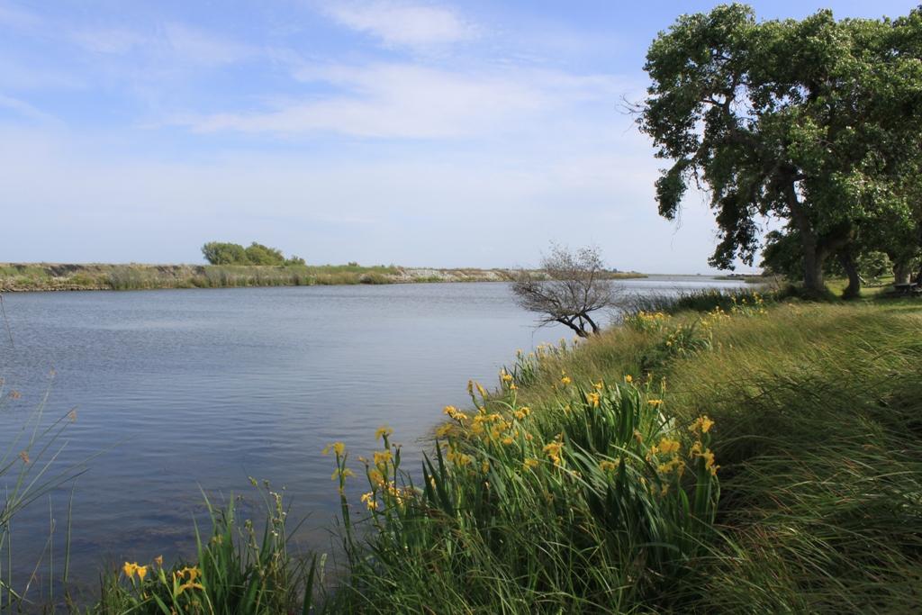 Brannan Island State Park Apr 2014 #6