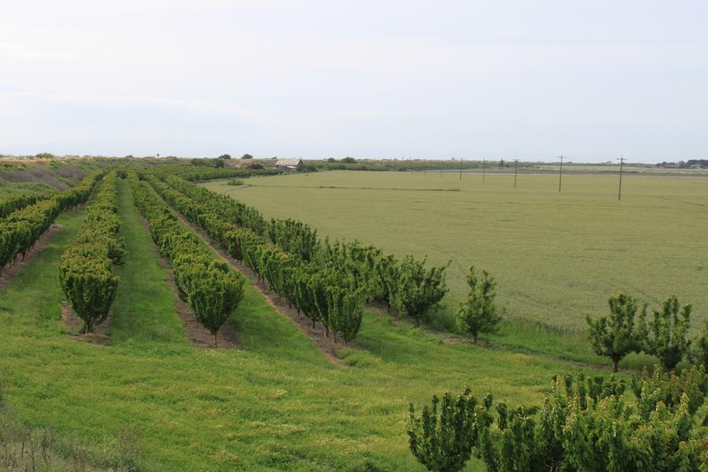 Delta farm and field Apr 2014