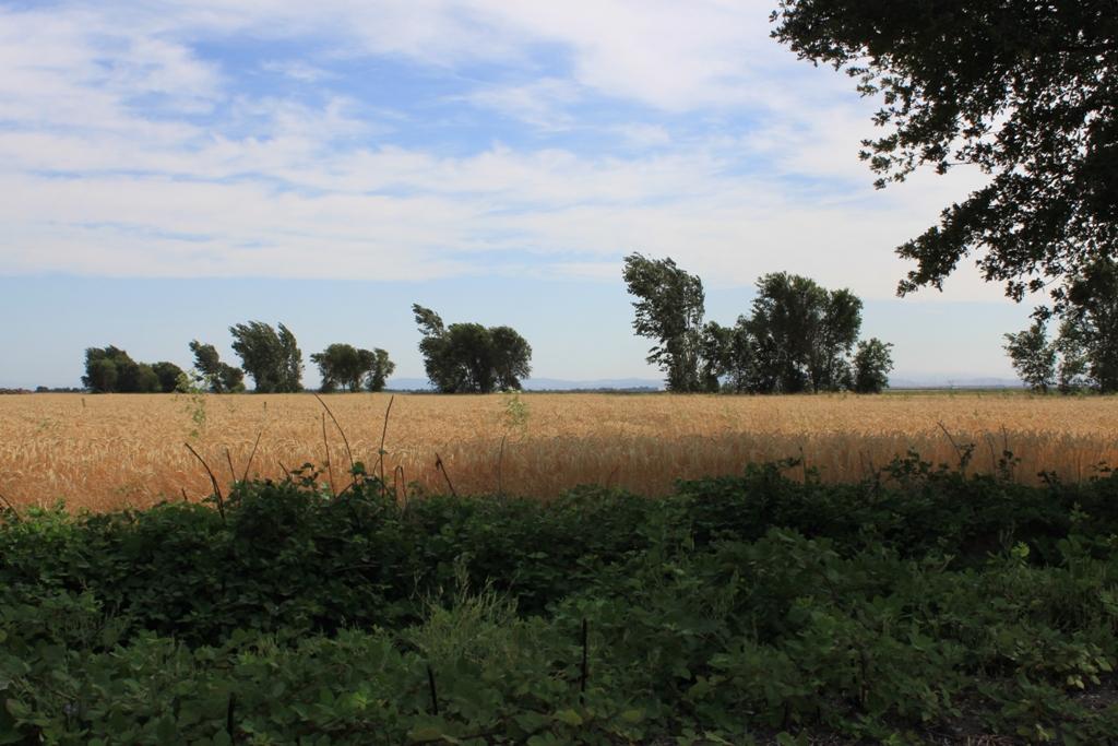 Delta field June 2013