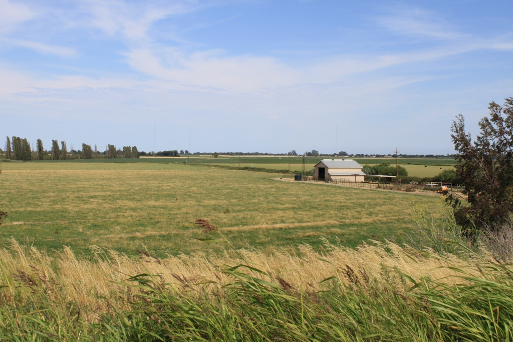 Delta field and farm June 2013 #5