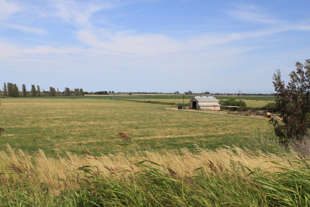 Delta field and farm June 2013 #5