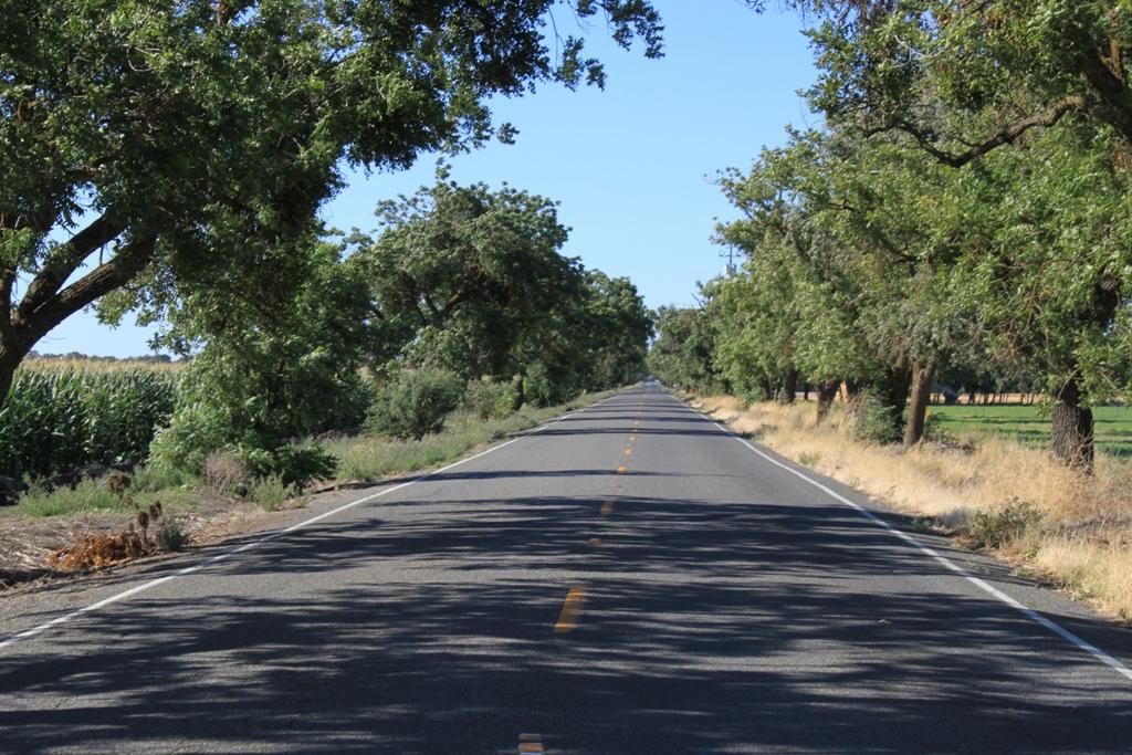 Delta road, July 2013