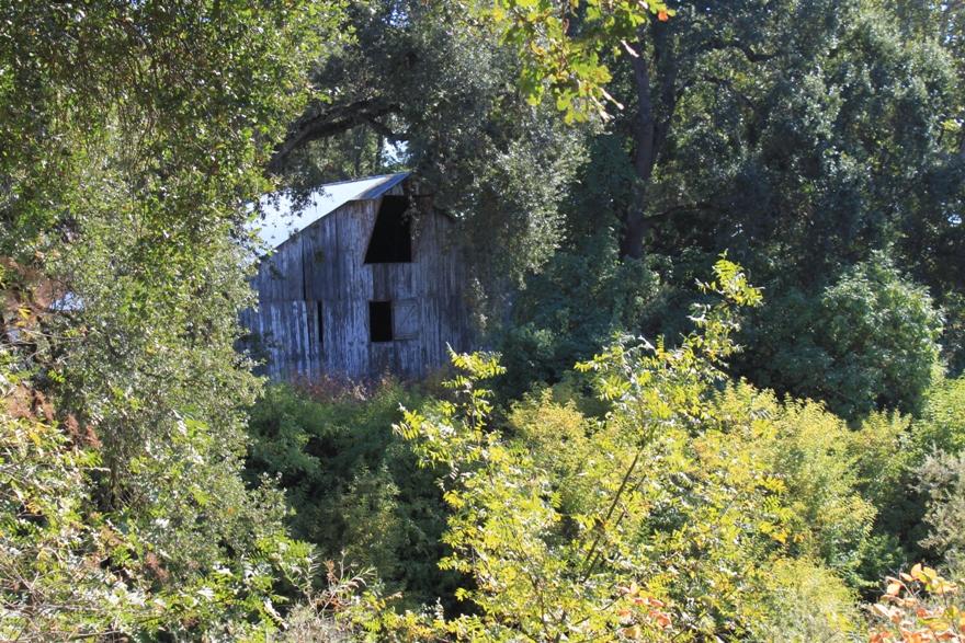 Fremont Weir - abandoned farm Oct 2013 #4