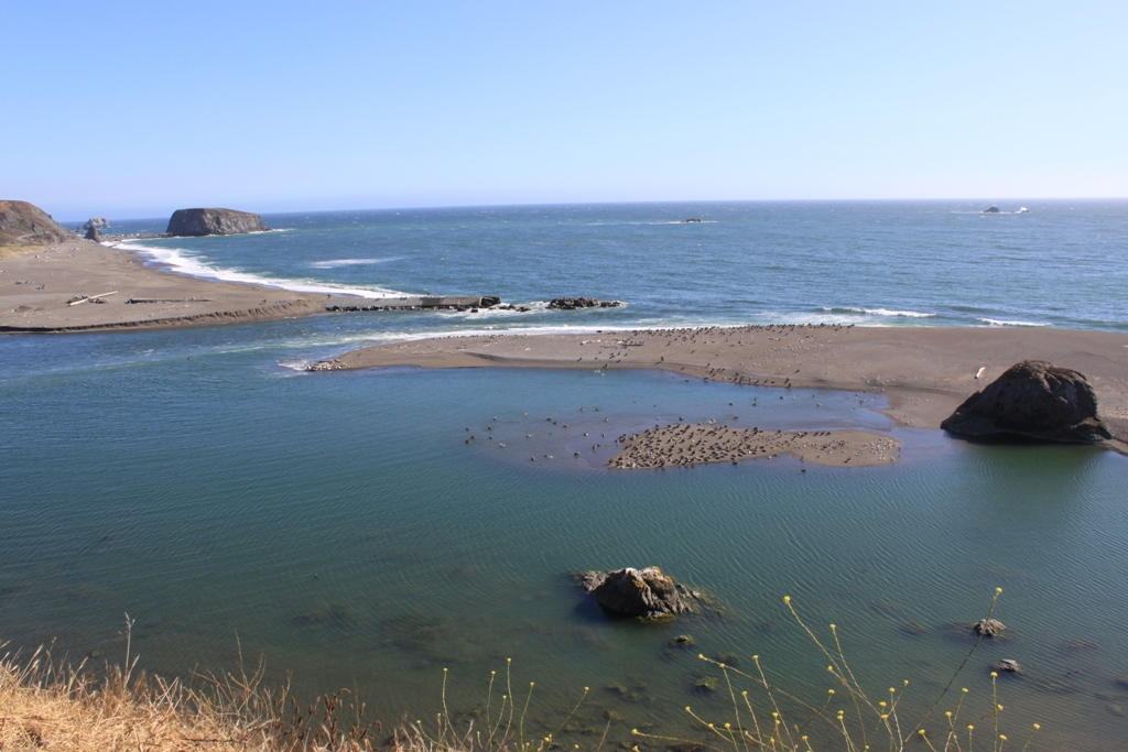 Russian River meets the Pacific Aug 2015 #9