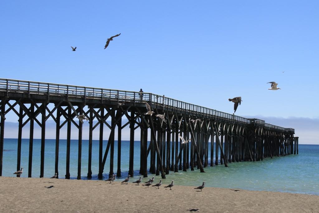 San Simeon Beach Aug 2013 #17
