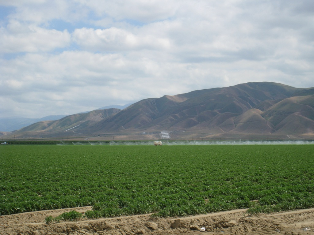 So, Central Valley fields, irrigation, Teerink #1 May 2010