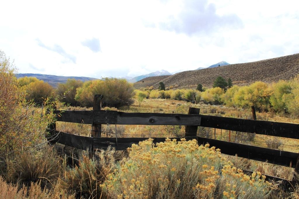 Abandoned farm by Little Walker River Oct 2015 #5