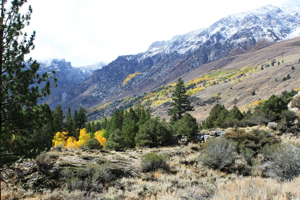 Eastern Sierra June Lake Loop Oct 2015 #1