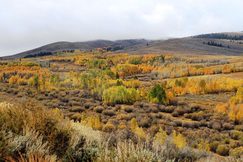 Fall in the Eastern Sierra Oct 2015 #13