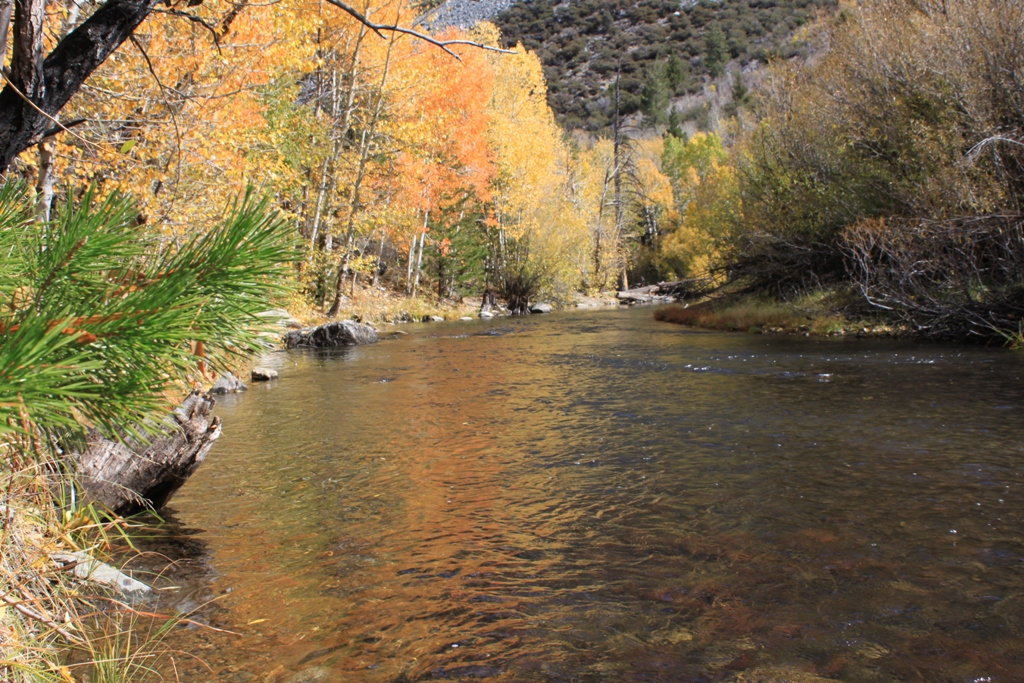 Rush Creek, June Lake Loop, Oct 2015 #11