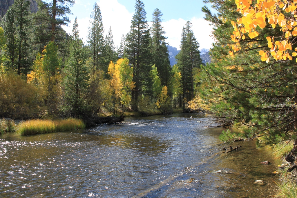 Rush Creek, June Lake Loop, Oct 2015 #12