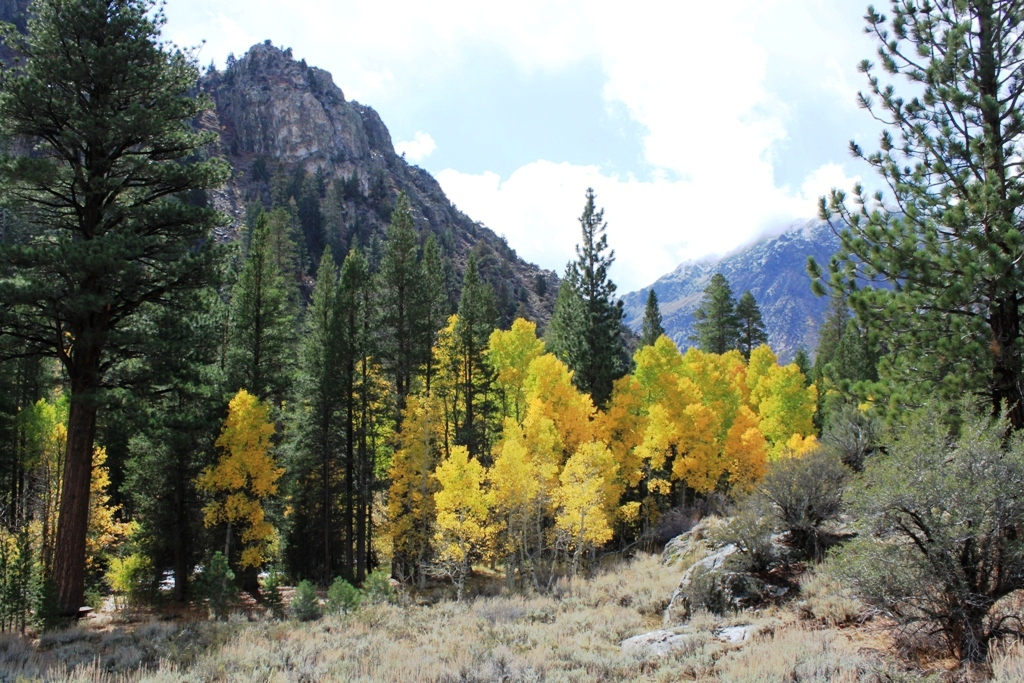 Rush Creek, June Lake Loop, Oct 2015 #2