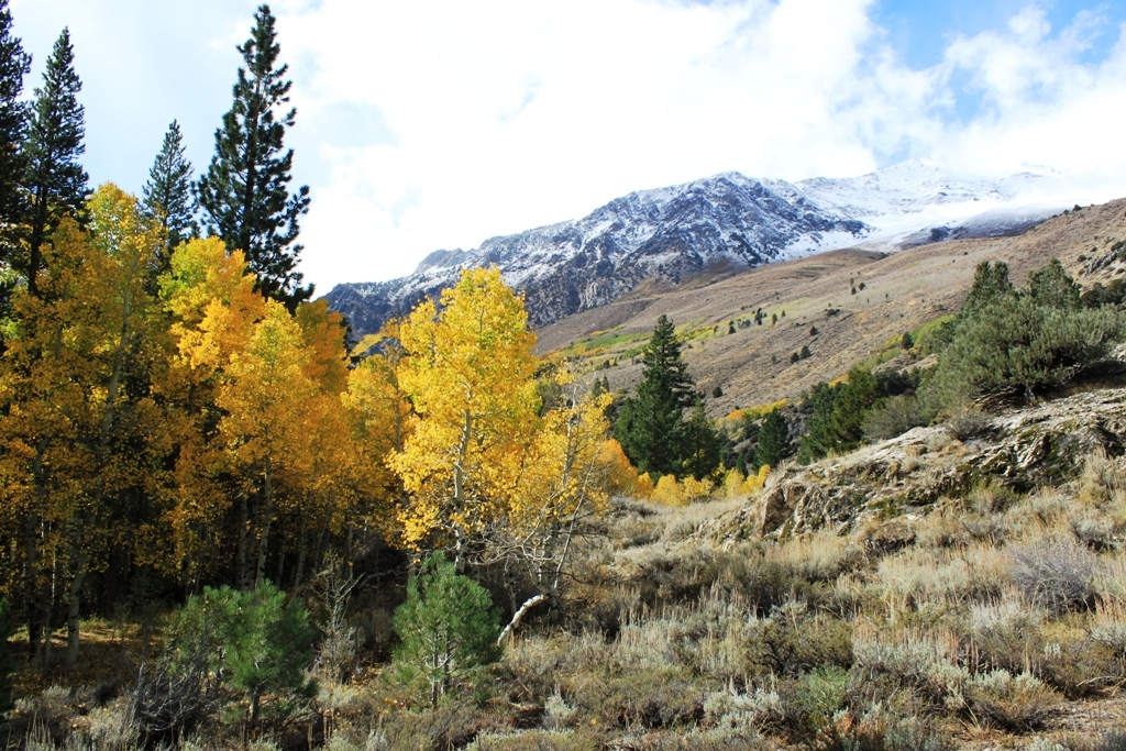 Rush Creek, June Lake Loop, Oct 2015 #5