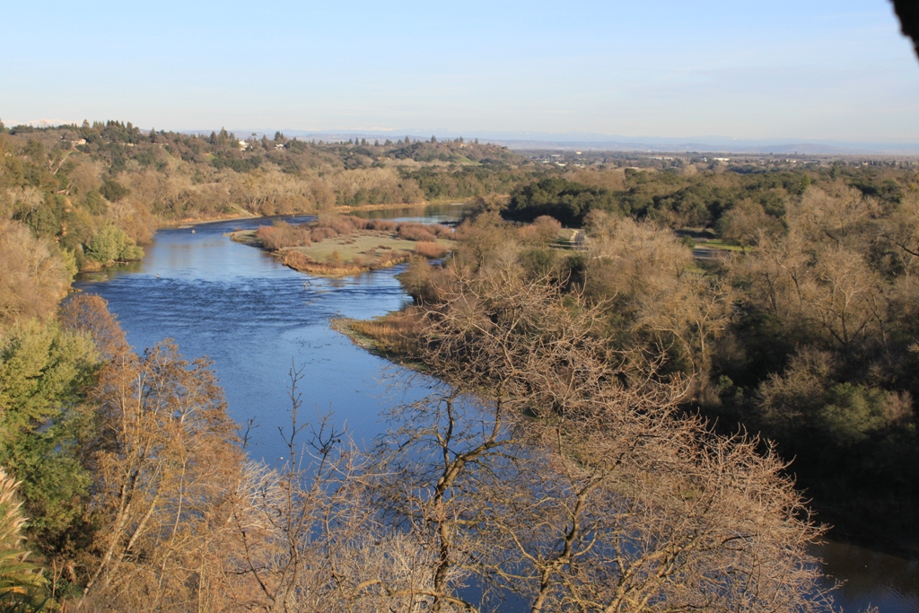 American River at Fair Oaks Bridge Jan 2016 #12